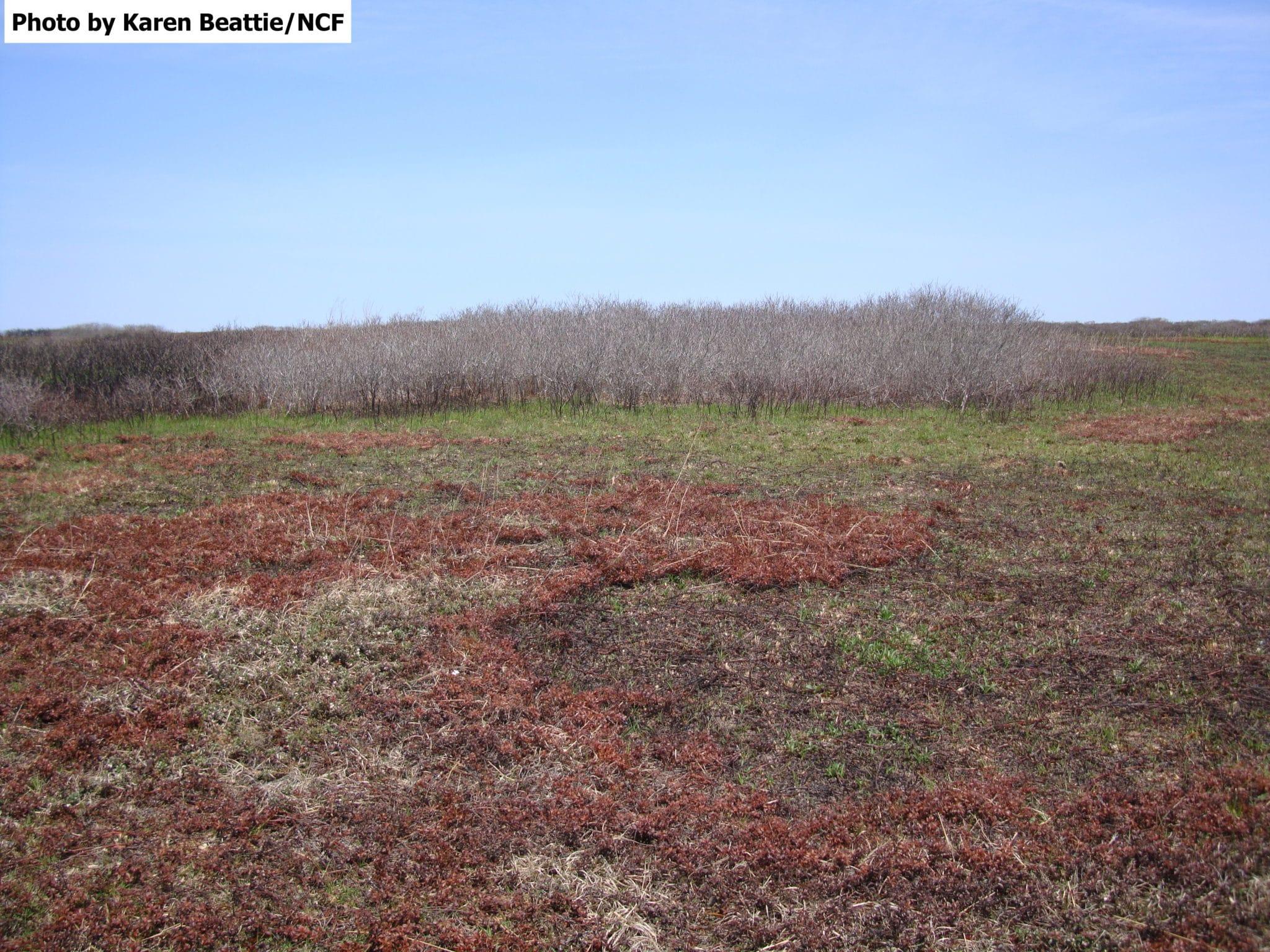Ram Pasture Post Burn May 12 2014 by KCB 024 watermarked
