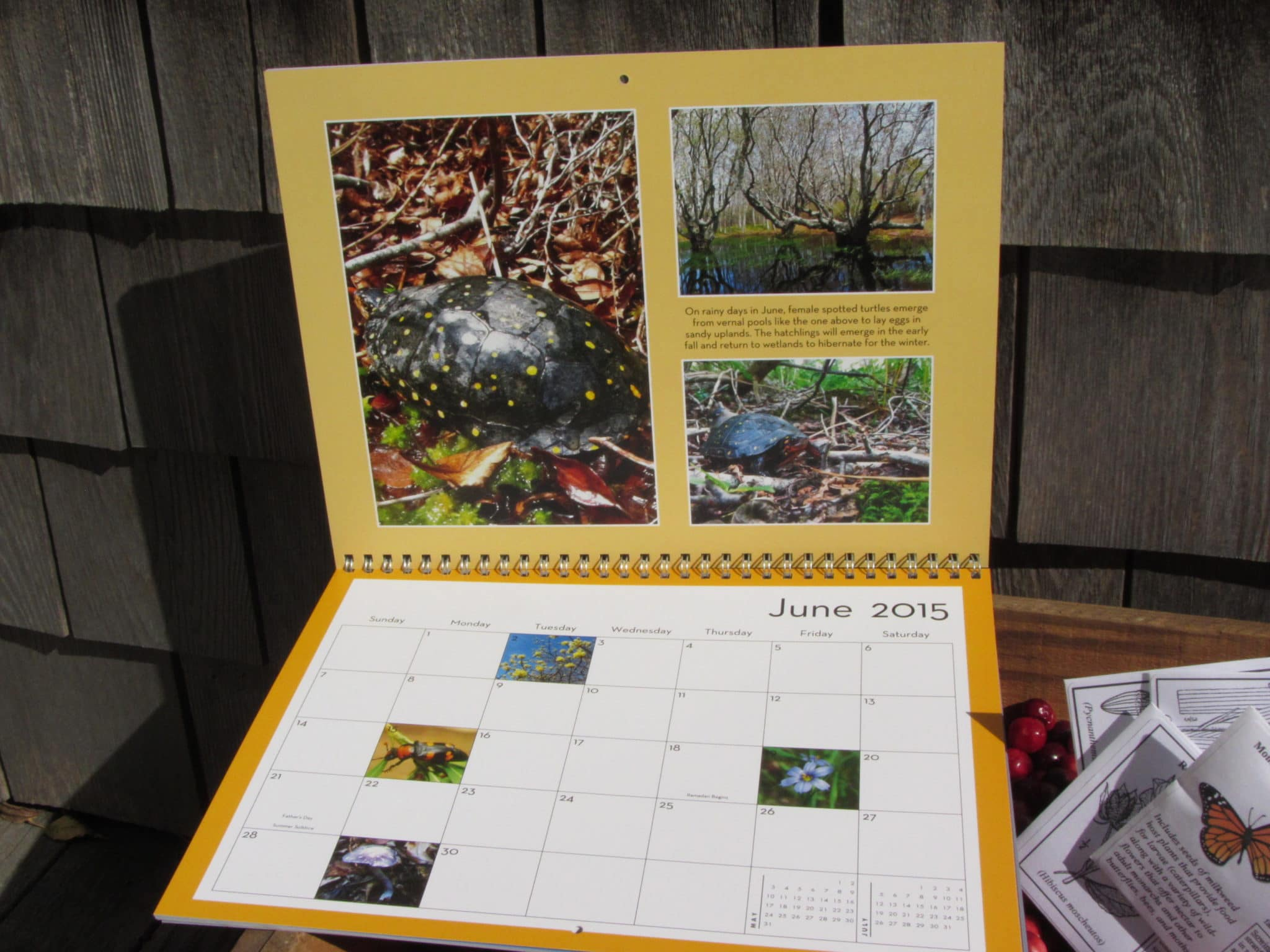 June 2015 NCF Calendar page, starring the spotted turtle (Clemys guttata).