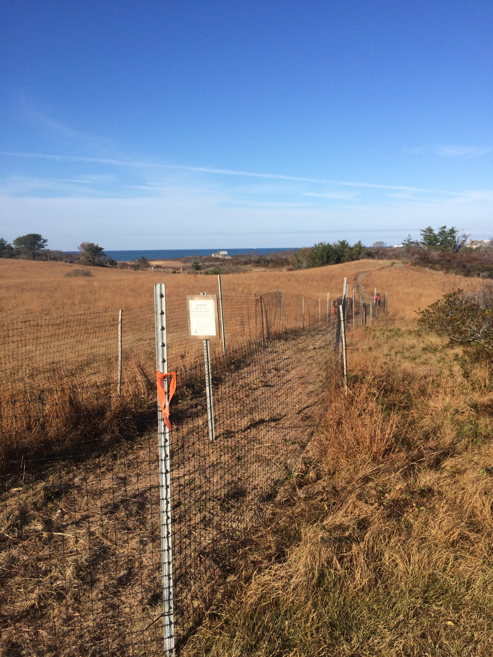 Reseeded area, fenced for the winter. We will monitor grass growth next year and hope this trail is able to re-establish.