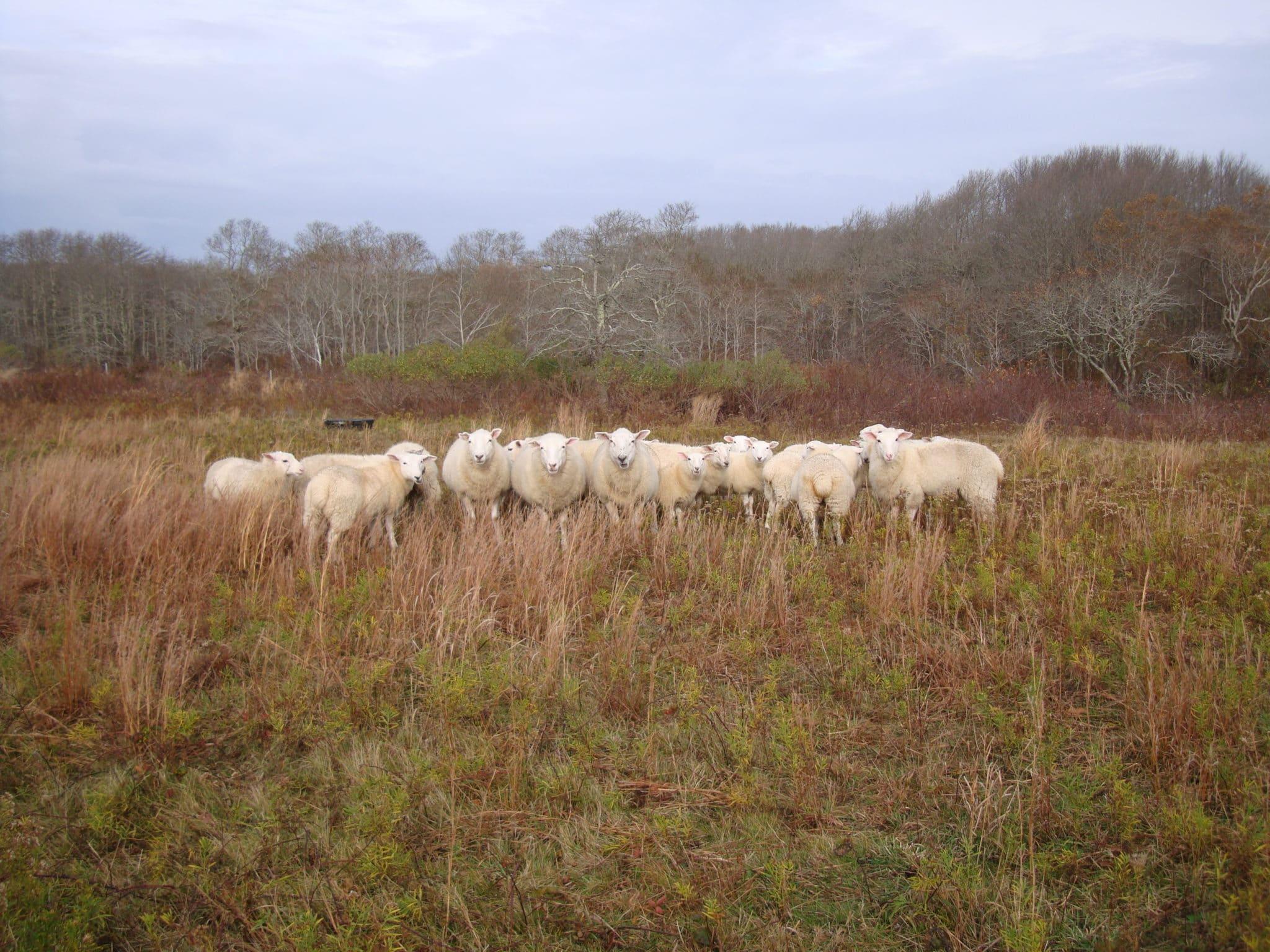 Sheep Squam Nov 2012 001