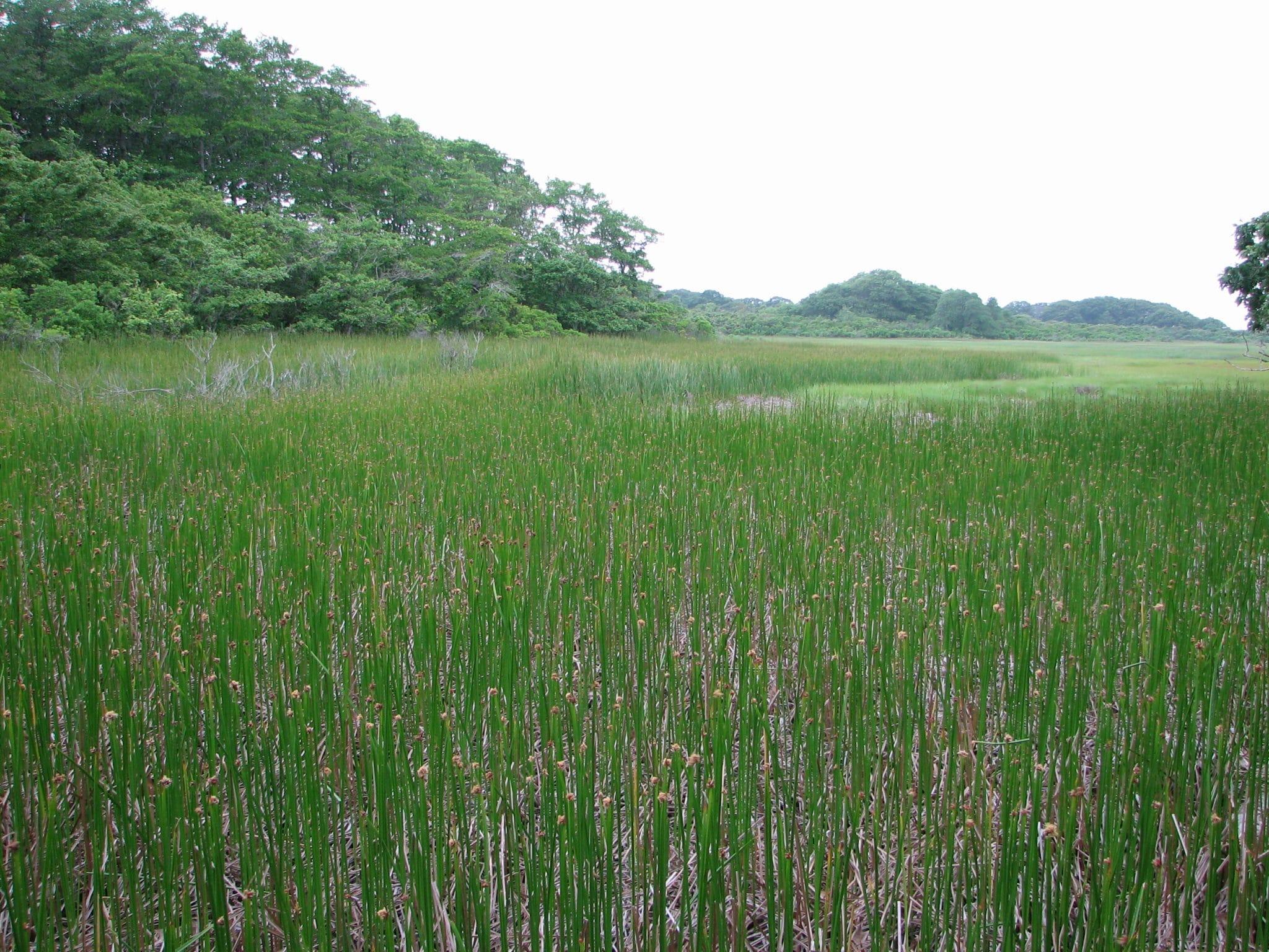 Masquetuck Marsh