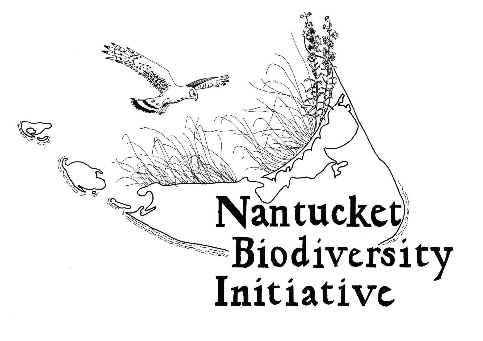 Nantucket Biodiversity Initiative Logo With White Border