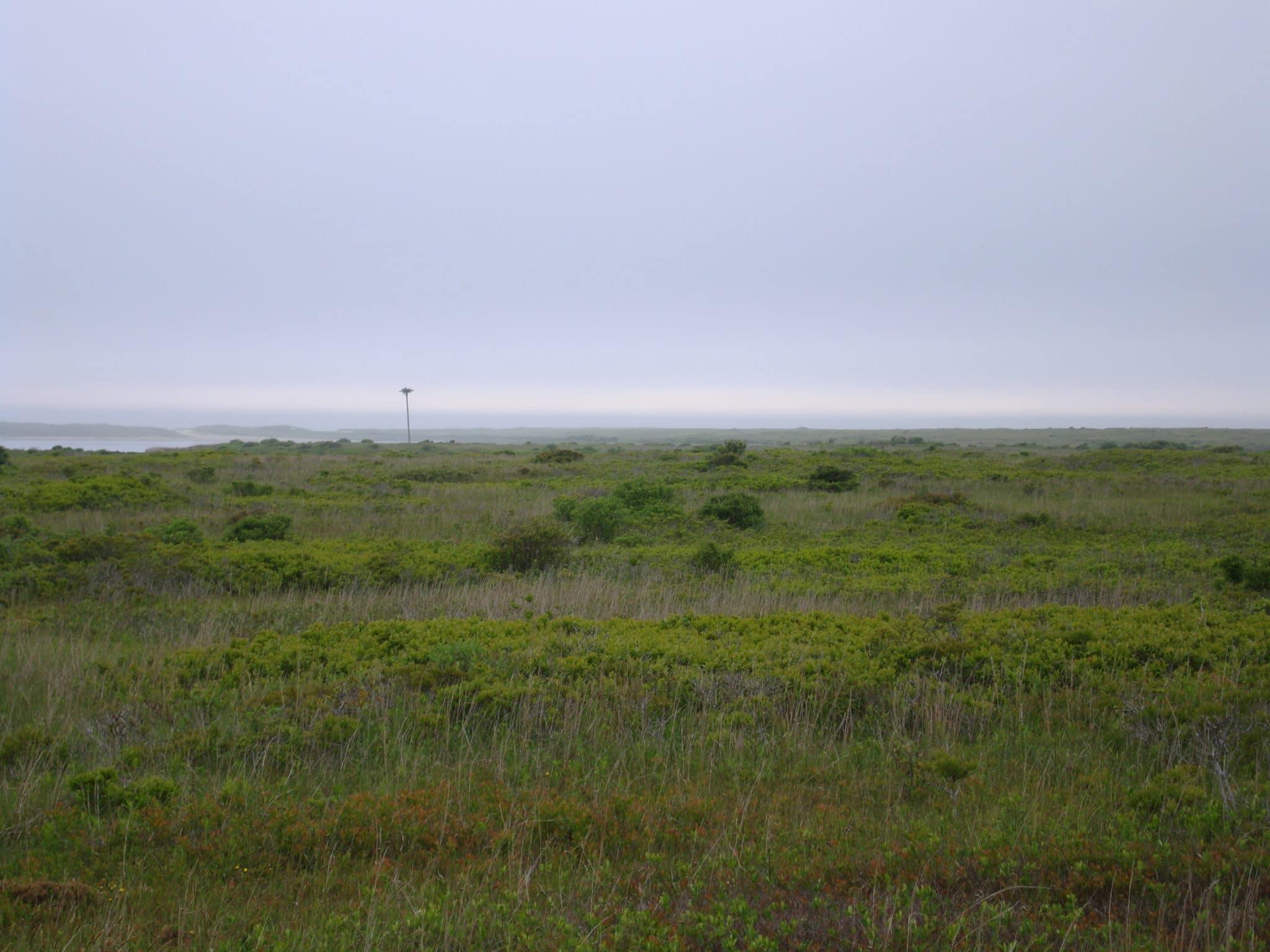 Ram Pasture