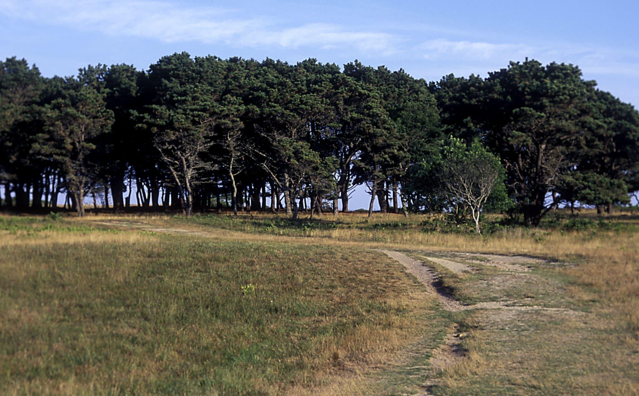 Treessandford