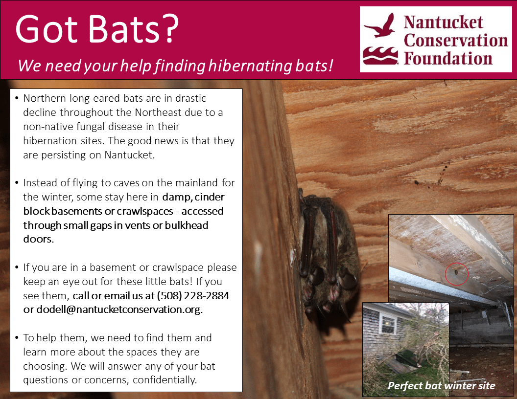 Bats in your Basement?