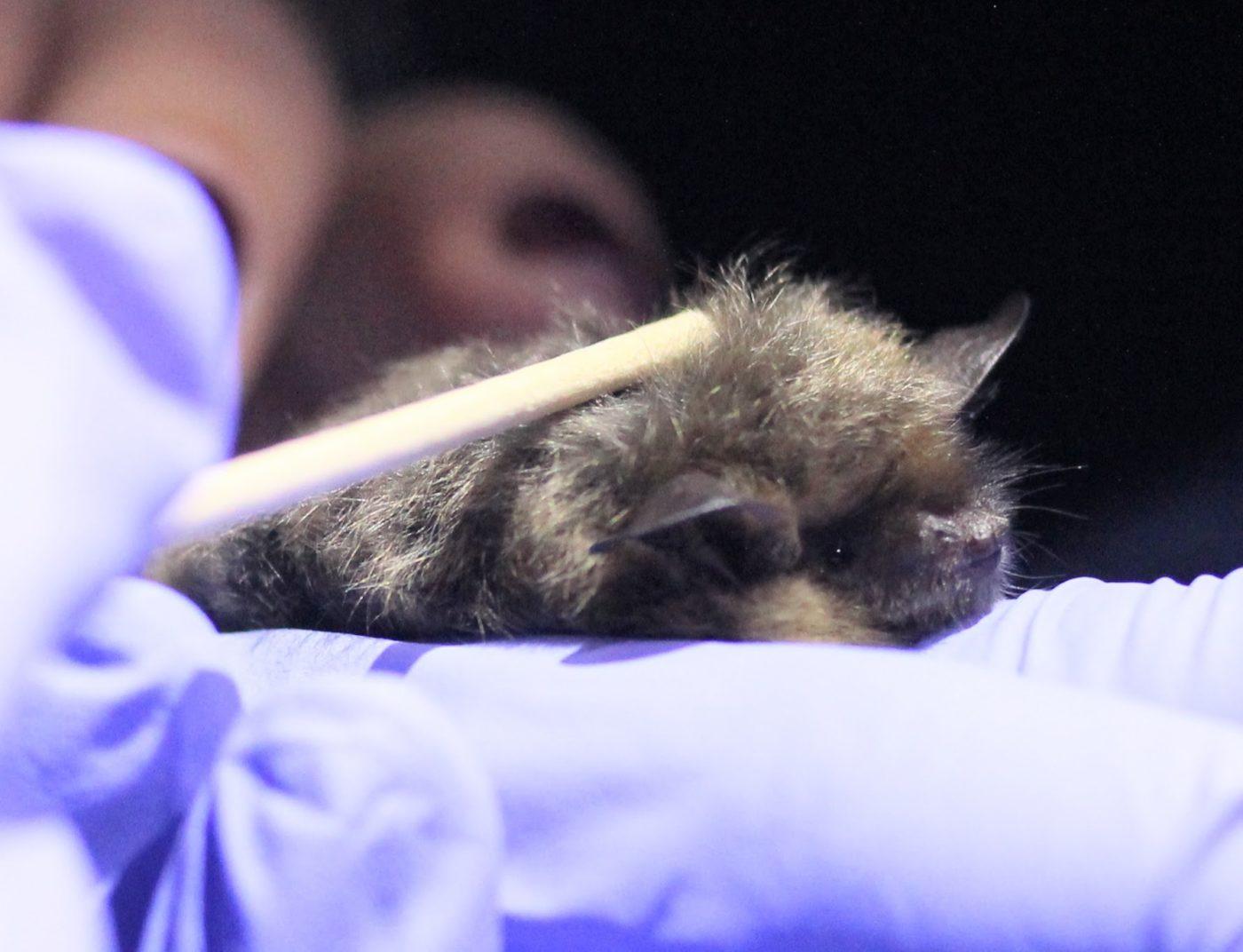 Bats Aren't Bad Guys