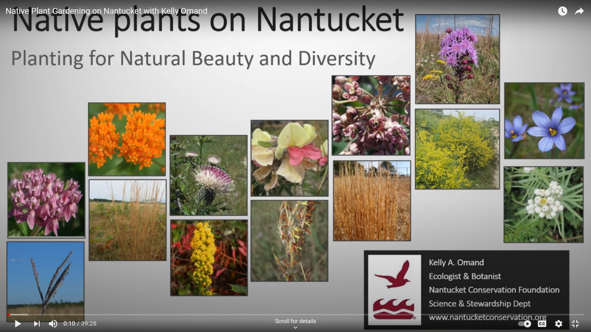 Native Plants On Nantucket