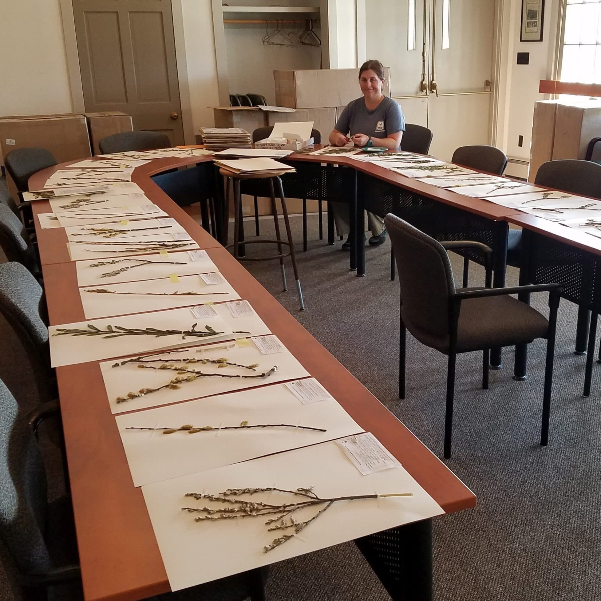 Kelly With Herbarium Specimens