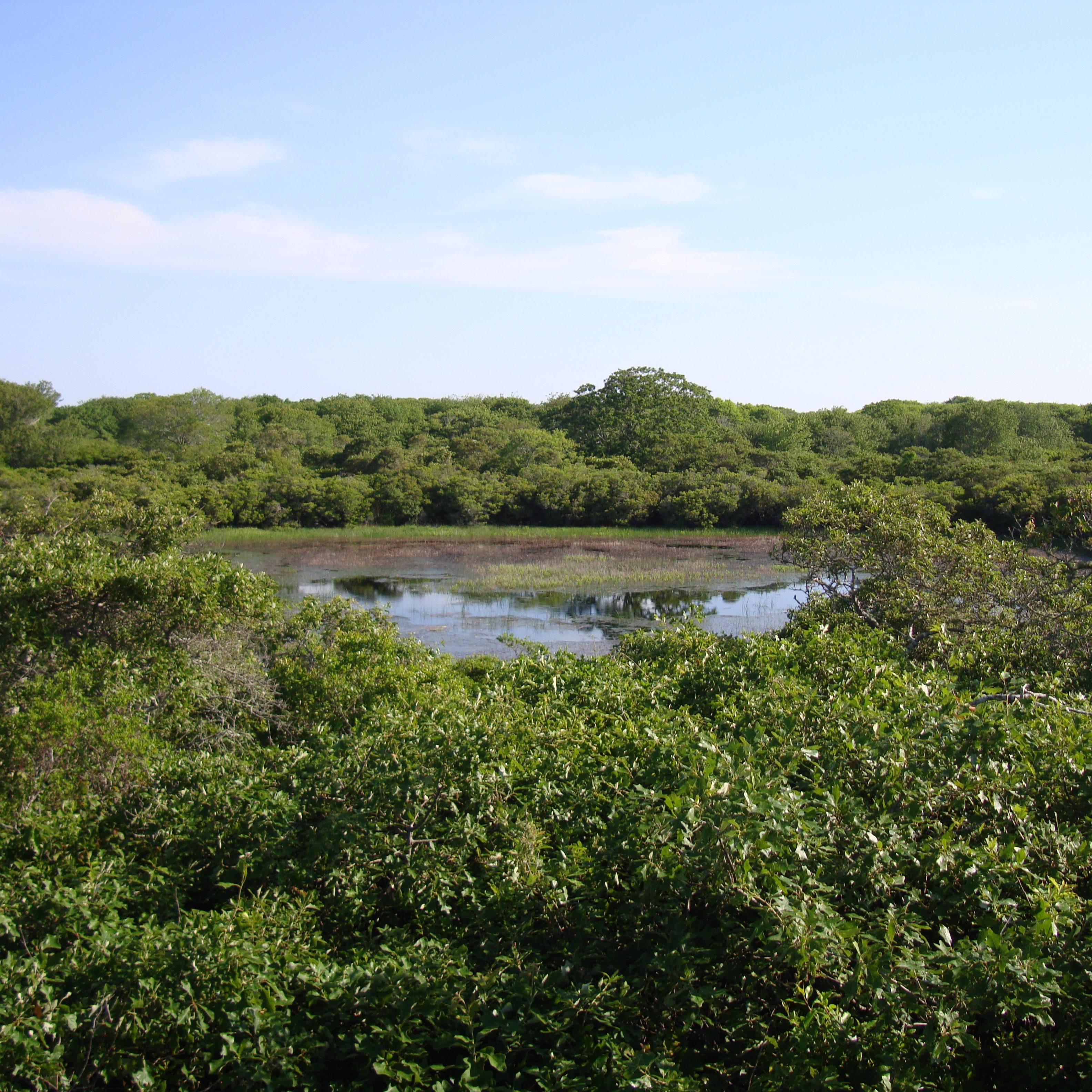 Kettlehole pond at Norwood Farm