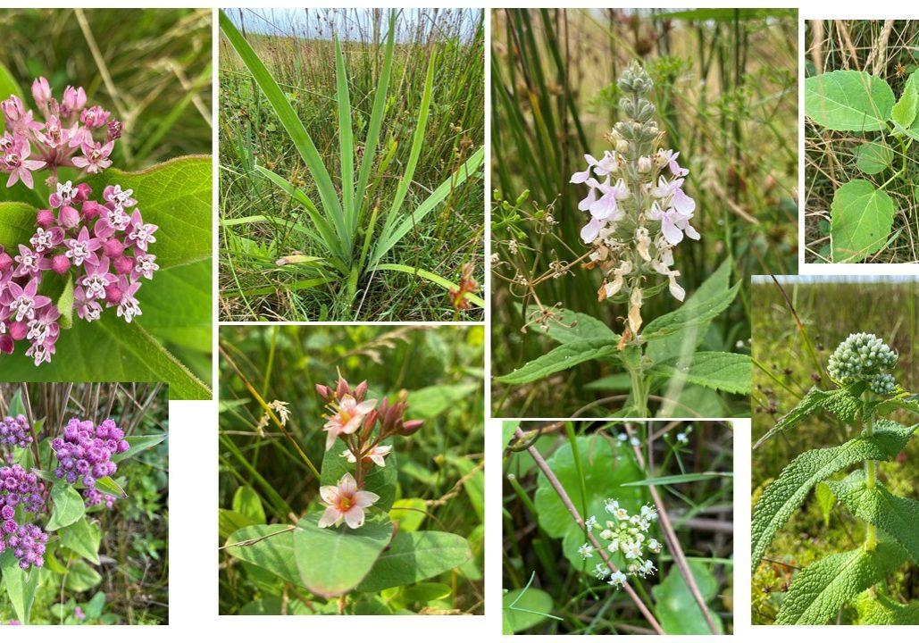 Blog Plant Diversity