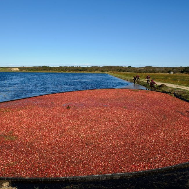 Milestone Cranberry Bog