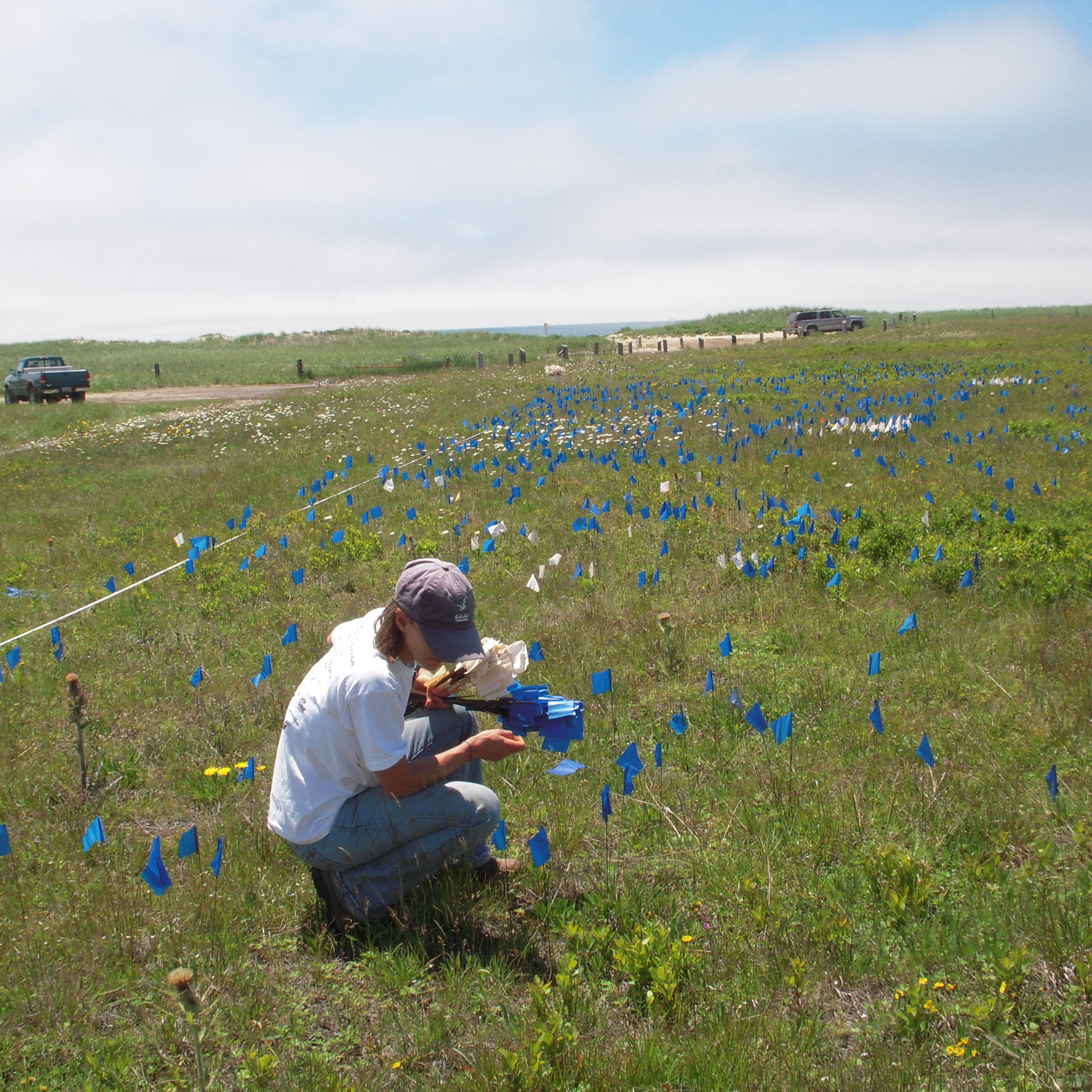 A rare plant survey at Head of the Plains
